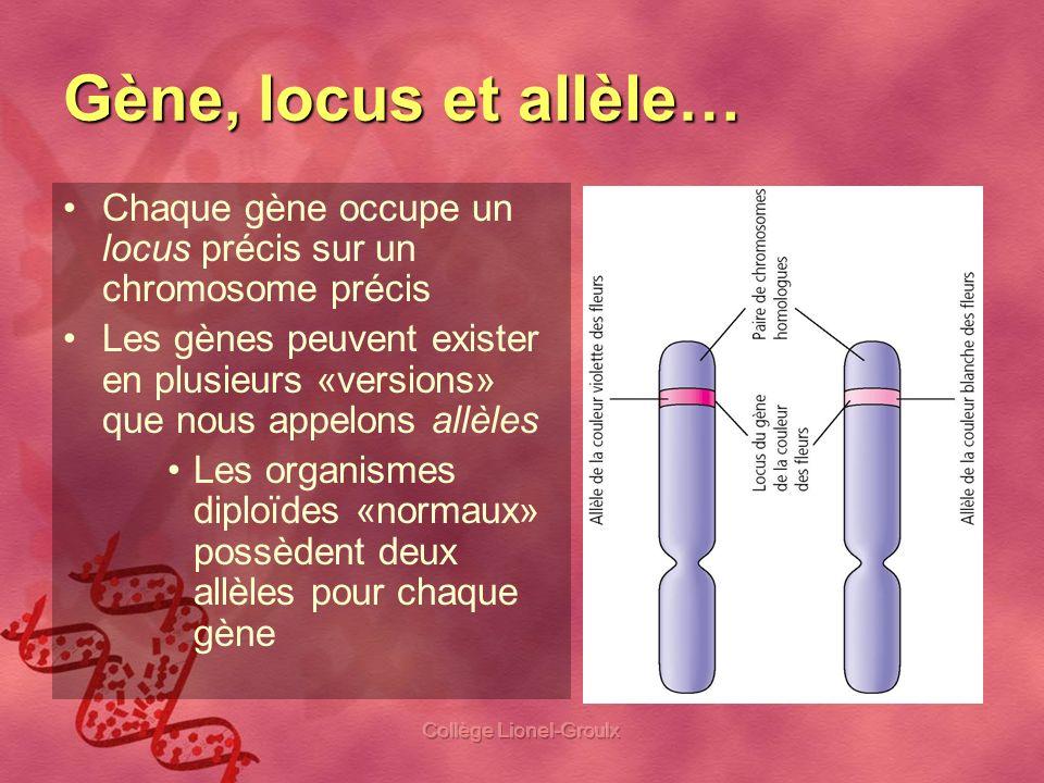 Collège Lionel-Groulx Gène, locus et allèle… Chaque gène occupe un locus précis sur un chromosome précis Les gènes peuvent exister en plusieurs «versi