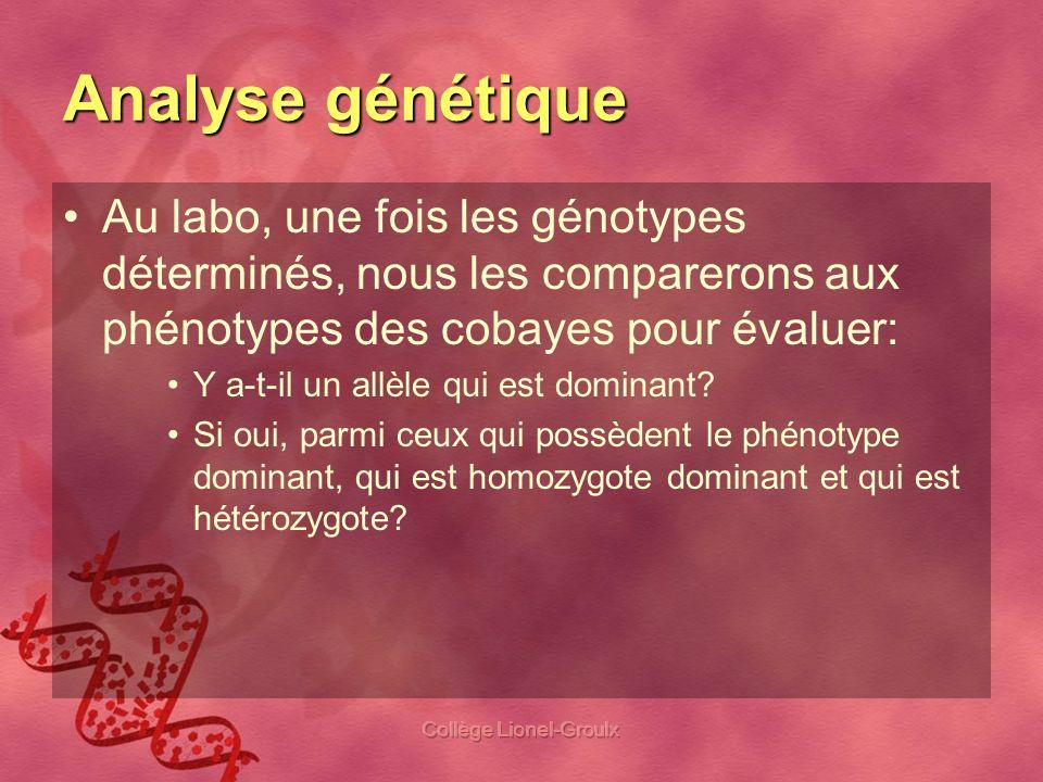 Collège Lionel-Groulx Analyse génétique Au labo, une fois les génotypes déterminés, nous les comparerons aux phénotypes des cobayes pour évaluer: Y a-
