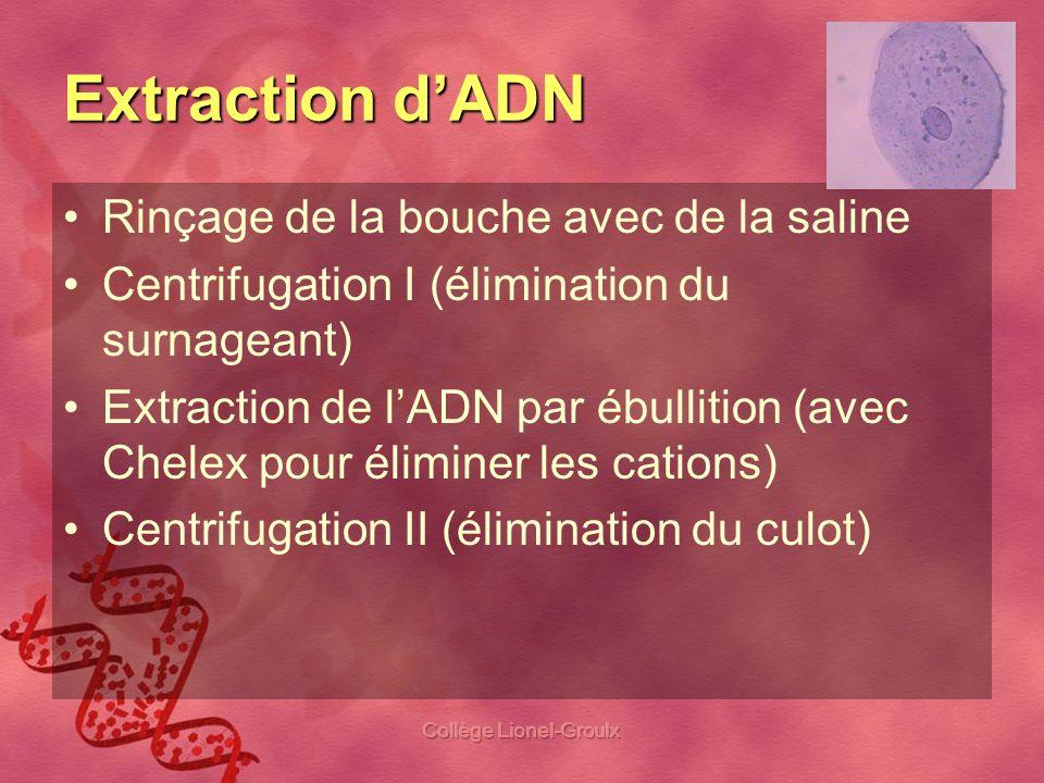 Collège Lionel-Groulx Extraction dADN Rinçage de la bouche avec de la saline Centrifugation I (élimination du surnageant) Extraction de lADN par ébull