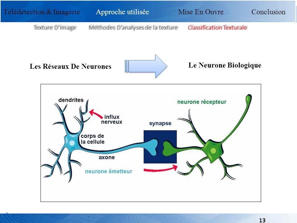 Mise En Ouvre Conclusion Texture DImage Méthodes Danalyses de la texture Classification Texturale Les Réseaux De Neurones Le Neurone Biologique Télédé