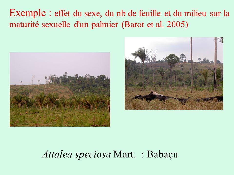 Attalea speciosa Mart. : Babaçu Exemple : effet du sexe, du nb de feuille et du milieu sur la maturité sexuelle d'un palmier (Barot et al. 2005)