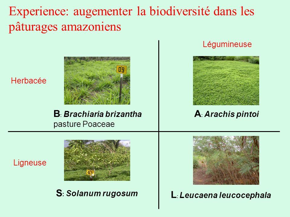 Experience: augementer la biodiversité dans les pâturages amazoniens S : Solanum rugosum A : Arachis pintoi L : Leucaena leucocephala B : Brachiaria b