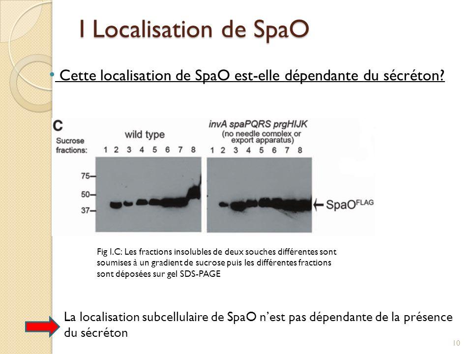 I Localisation de SpaO Cette localisation de SpaO est-elle dépendante du sécréton? Fig I.C: Les fractions insolubles de deux souches différentes sont