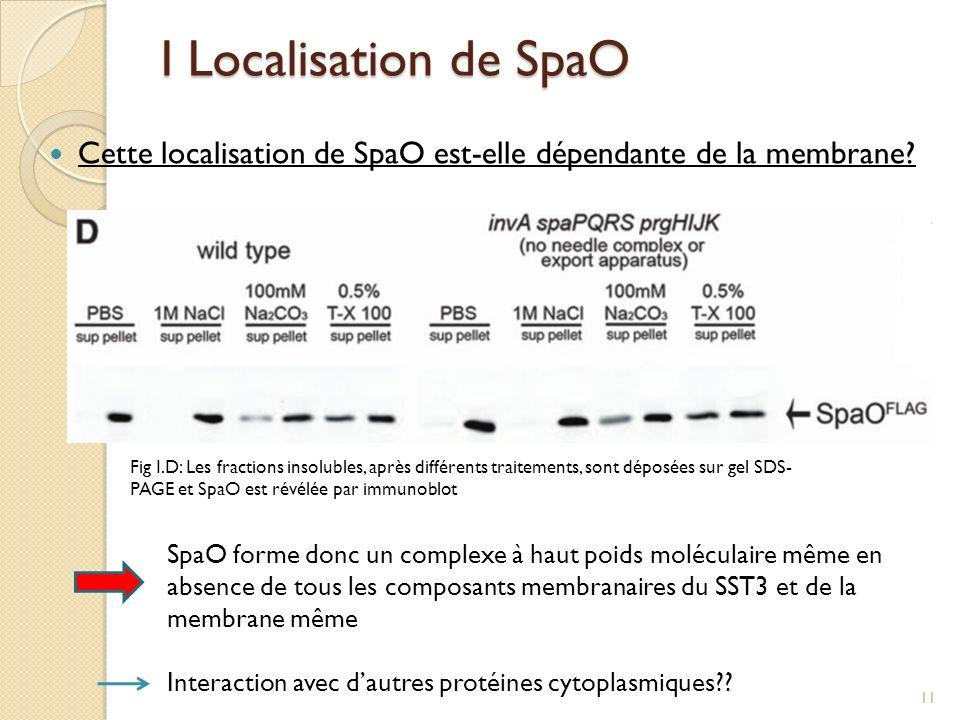 I Localisation de SpaO Cette localisation de SpaO est-elle dépendante de la membrane? Fig I.D: Les fractions insolubles, après différents traitements,