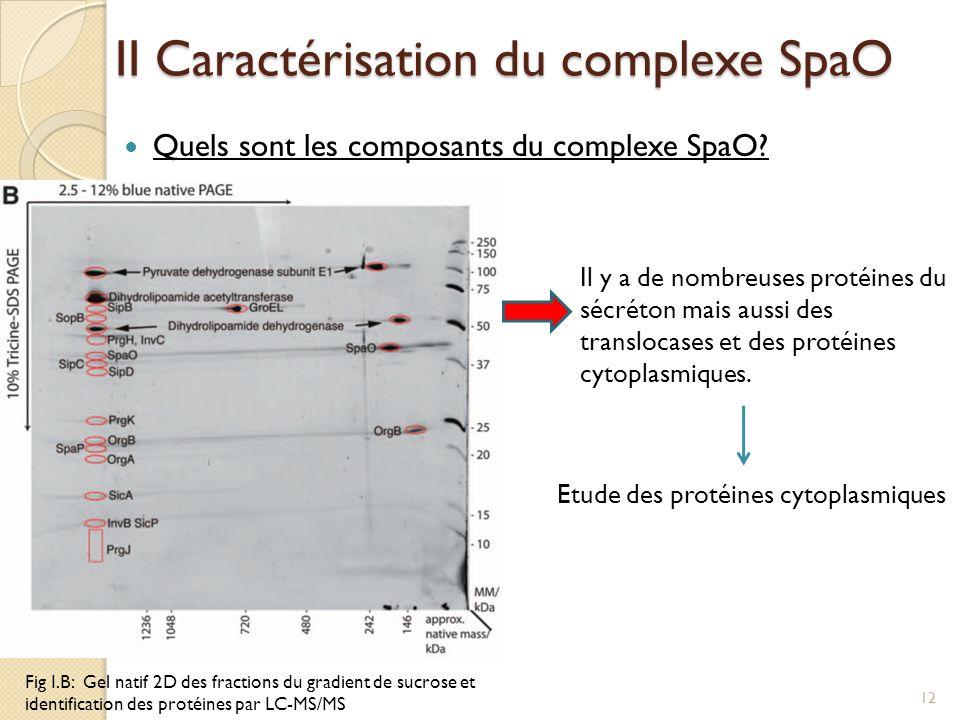 II Caractérisation du complexe SpaO Quels sont les composants du complexe SpaO? Fig I.B: Gel natif 2D des fractions du gradient de sucrose et identifi
