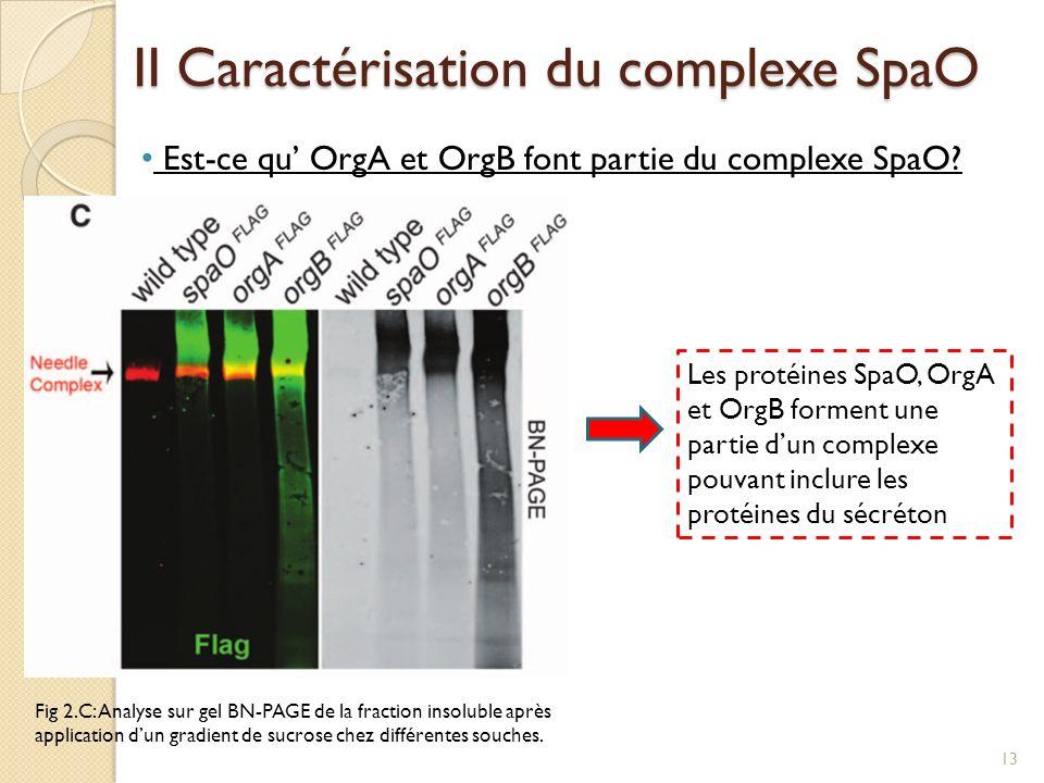 II Caractérisation du complexe SpaO Est-ce qu OrgA et OrgB font partie du complexe SpaO? Fig 2.C: Analyse sur gel BN-PAGE de la fraction insoluble apr