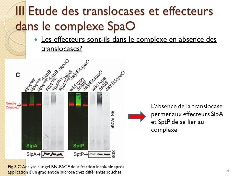 Les effecteurs sont-ils dans le complexe en absence des translocases? III Etude des translocases et effecteurs dans le complexe SpaO Fig 3.C: Analyse