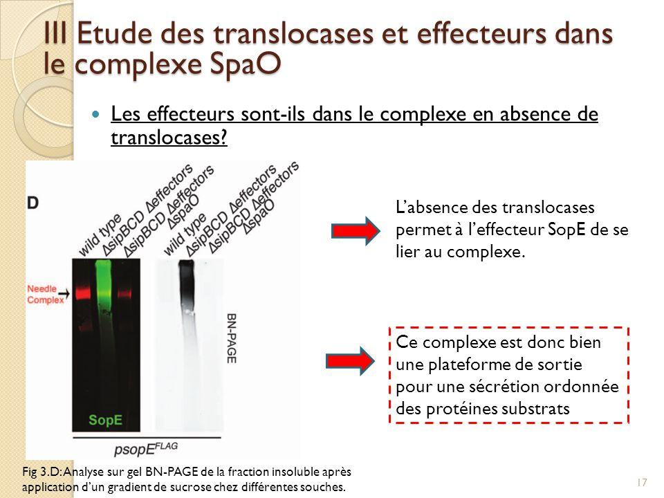 Les effecteurs sont-ils dans le complexe en absence de translocases? III Etude des translocases et effecteurs dans le complexe SpaO Fig 3.D: Analyse s