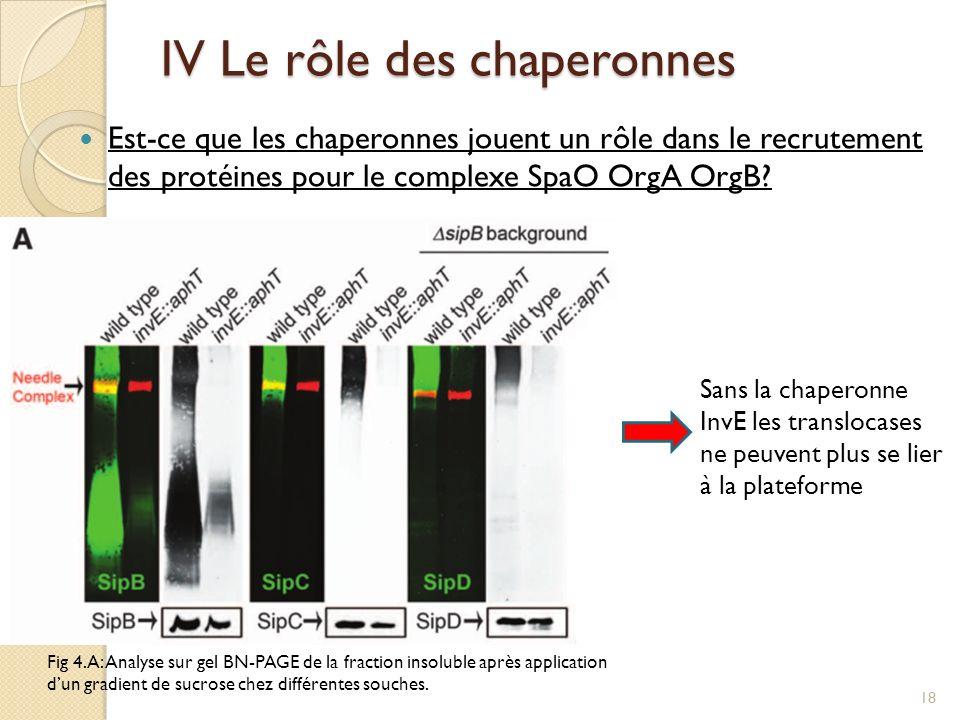IV Le rôle des chaperonnes Est-ce que les chaperonnes jouent un rôle dans le recrutement des protéines pour le complexe SpaO OrgA OrgB? Fig 4.A: Analy