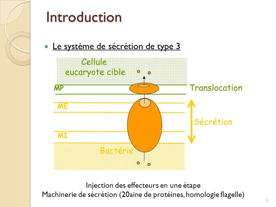 Introduction Le système de sécrétion de type 3 Injection des effecteurs en une étape Machinerie de sécrétion (20aine de protéines, homologie flagelle)