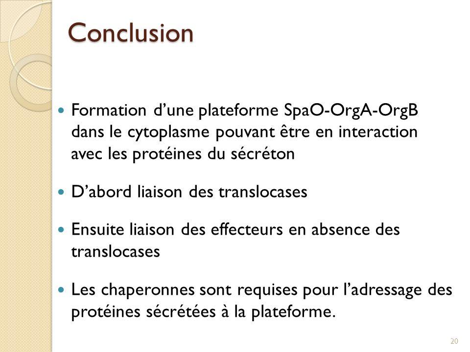 Conclusion Formation dune plateforme SpaO-OrgA-OrgB dans le cytoplasme pouvant être en interaction avec les protéines du sécréton Dabord liaison des t