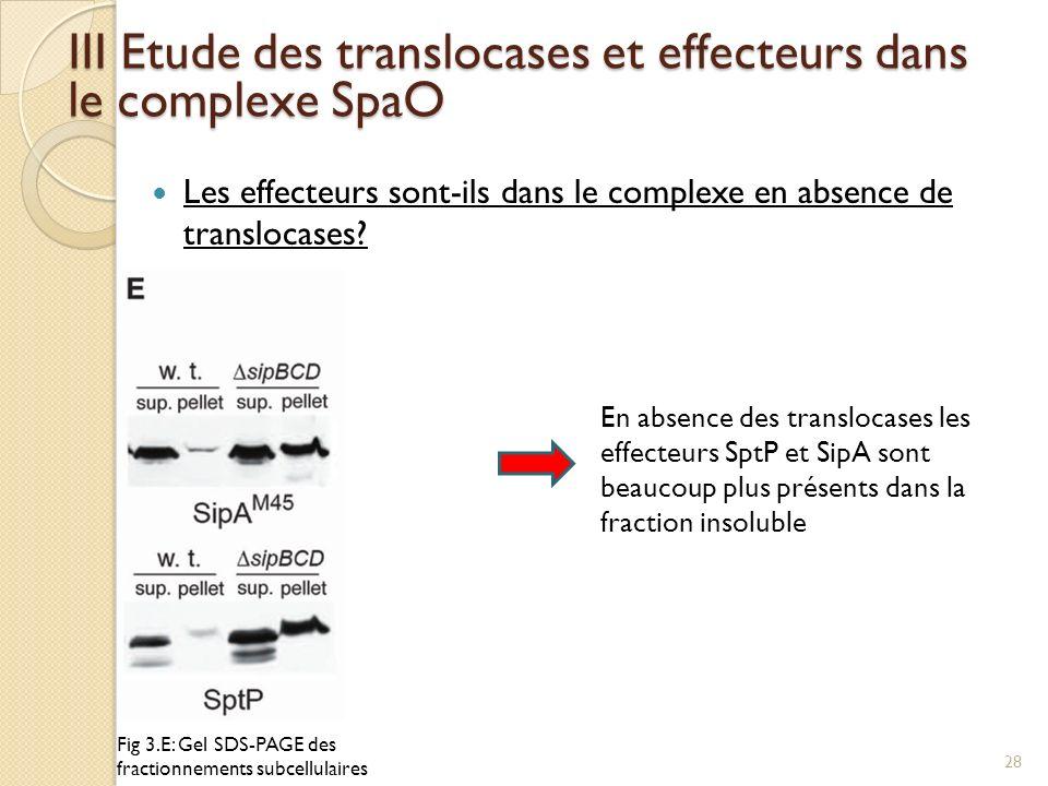 Les effecteurs sont-ils dans le complexe en absence de translocases? III Etude des translocases et effecteurs dans le complexe SpaO Fig 3.E: Gel SDS-P