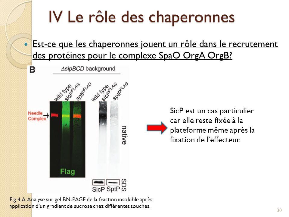 Est-ce que les chaperonnes jouent un rôle dans le recrutement des protéines pour le complexe SpaO OrgA OrgB? Fig 4.A: Analyse sur gel BN-PAGE de la fr