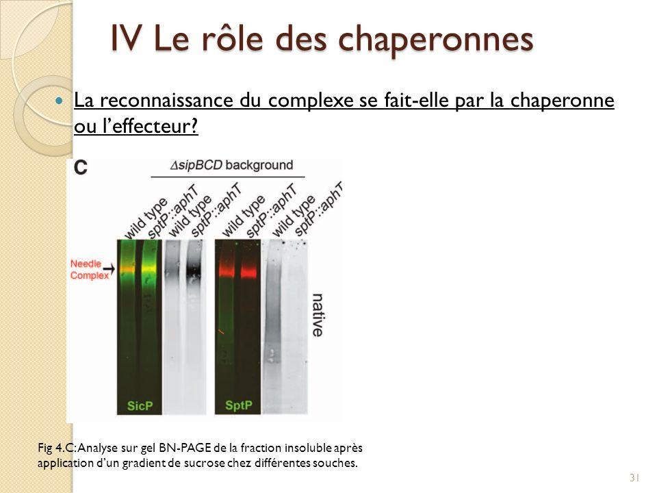 La reconnaissance du complexe se fait-elle par la chaperonne ou leffecteur? IV Le rôle des chaperonnes Fig 4.C: Analyse sur gel BN-PAGE de la fraction