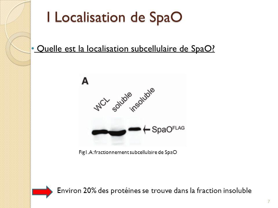 I Localisation de SpaO Fig1.A: fractionnement subcellulaire de SpaO Environ 20% des protéines se trouve dans la fraction insoluble Quelle est la local