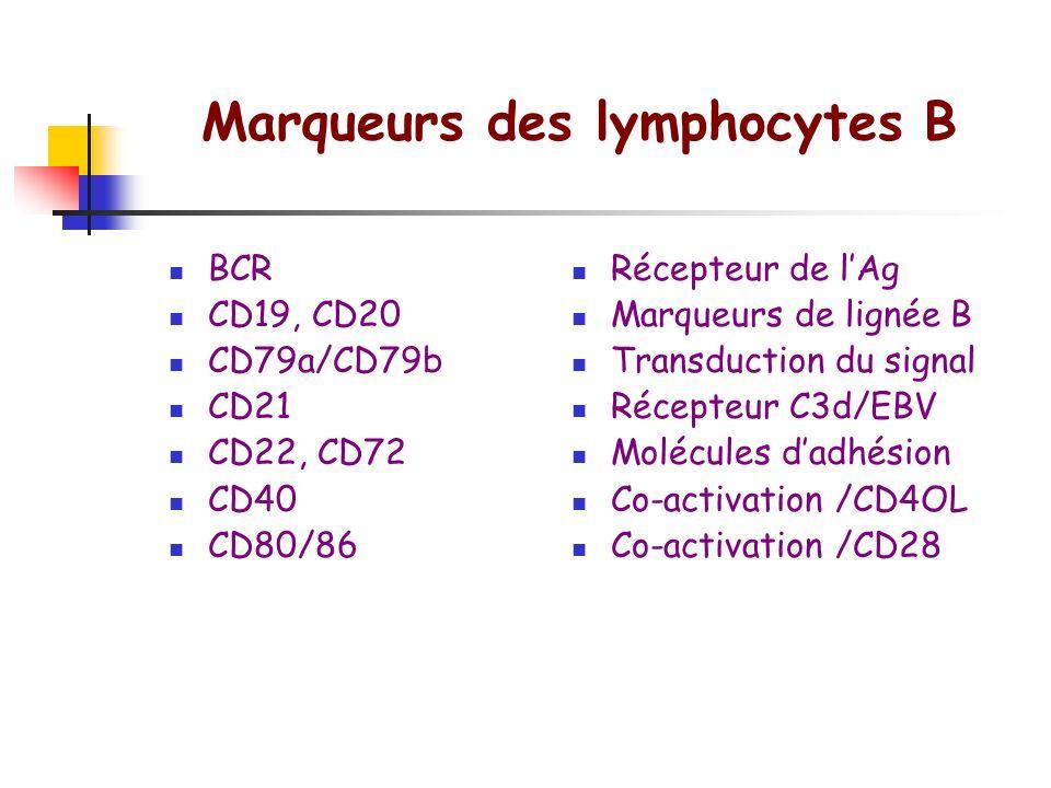 Marqueurs des lymphocytes T TCR CD2, CD5, CD7 CD3 CD4 CD8 CD28 CD40L CD25 LFA1, ICAM-1 CD45 RA/RO Récepteur de lAg Marqueurs de lignée T Transduction