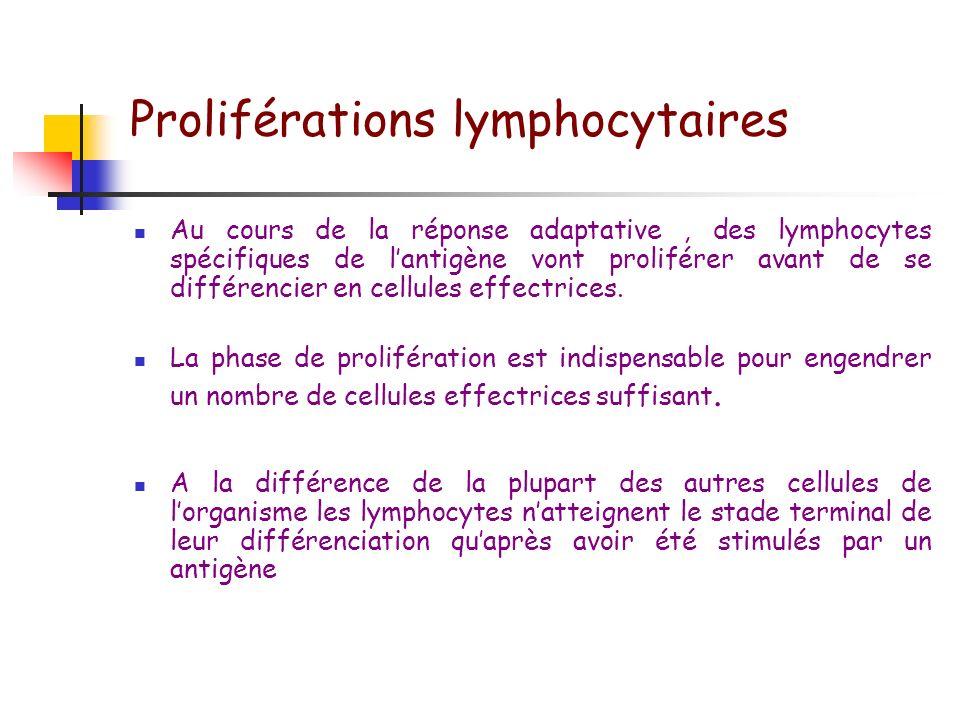 Intradermoréaction Lecture : taille de linduration à 48-72 heures Antigènes: Tuberculine Candidine Anatoxine tétanique Anatoxine diphtérique Trychophy