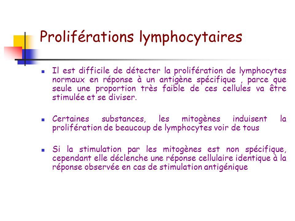 Proliférations lymphocytaires Au cours de la réponse adaptative, des lymphocytes spécifiques de lantigène vont proliférer avant de se différencier en