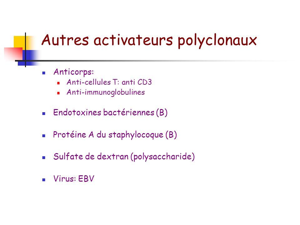 Mitogènes non spécifiques Concanavalline A: ConA (T) Phytohémagglutine: PHA (T) Pokeweed mitogen: PWM (T et B) Extrait de Nocardia opaca: NWSM