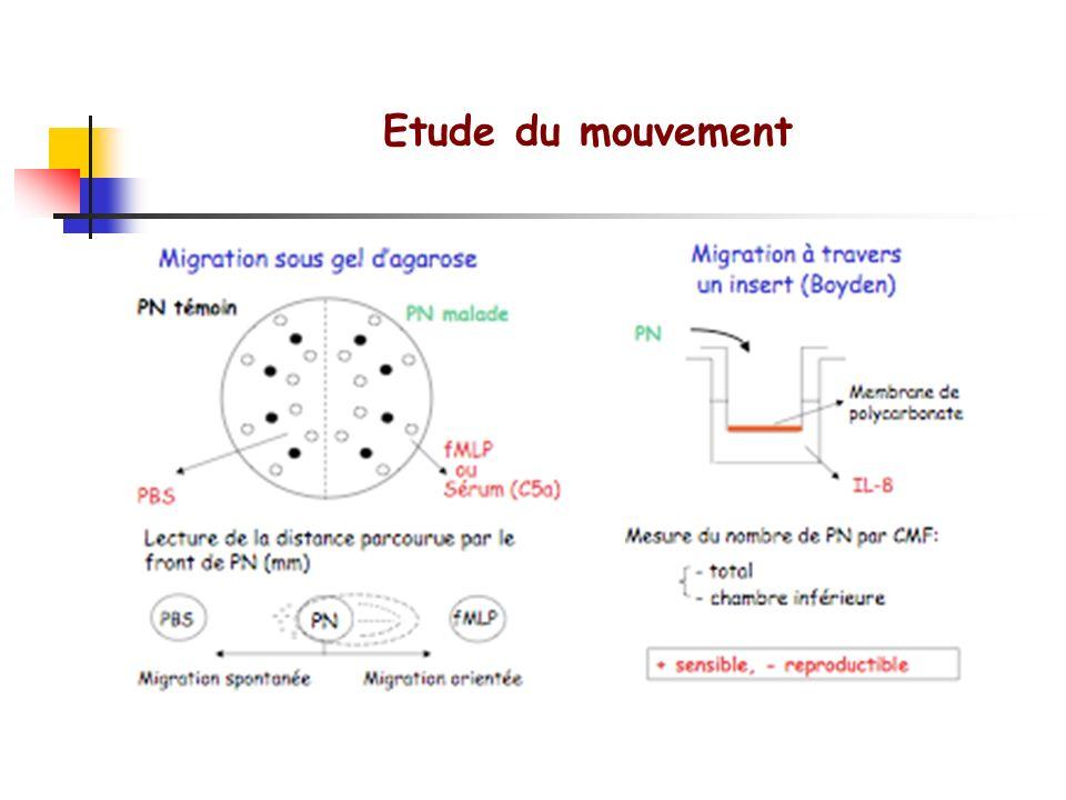 Etude de ladhérence Expression des molécules dadhérence à la surface des PN Sang total à +4°CEtat de base + fMLP à 37°CCapacité de réponse des PN Ac a