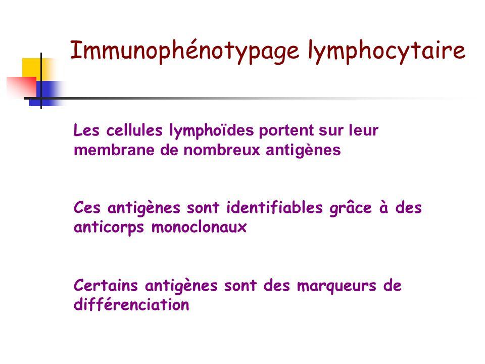 Lymphocytes: Caractérisation dans le sang périphérique Morphologie: Haut rapport nucléo-cytoplasmique Noyau à chromatine mottée 12 um Cytoplasme petit