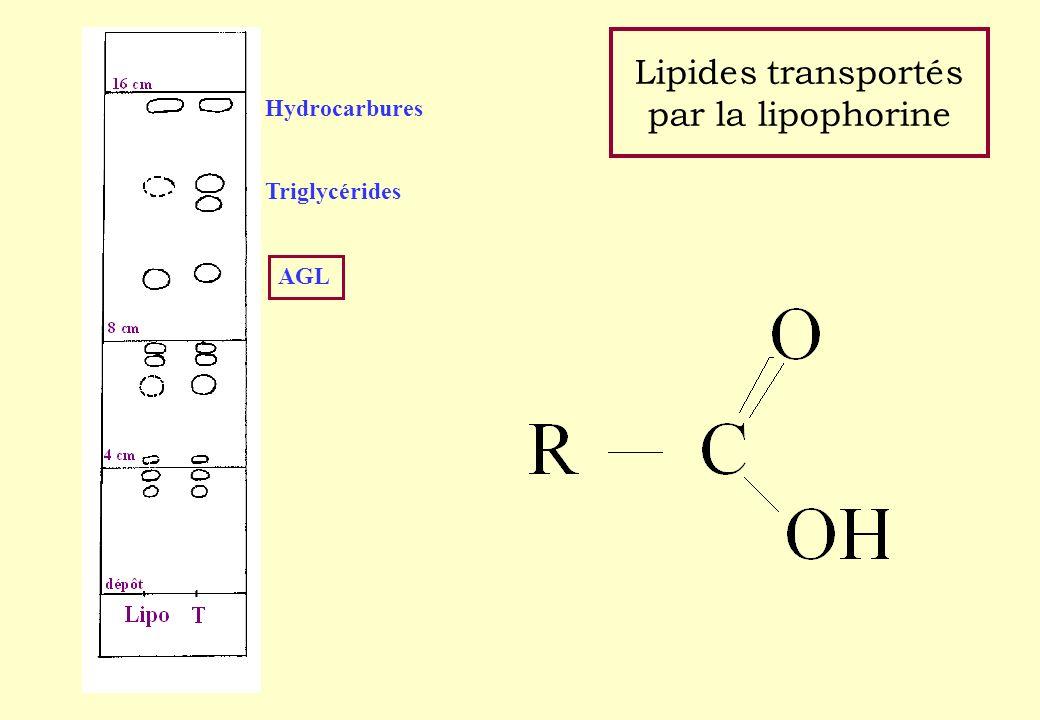 Lipides transportés par la lipophorine Hydrocarbures Triglycérides AGL