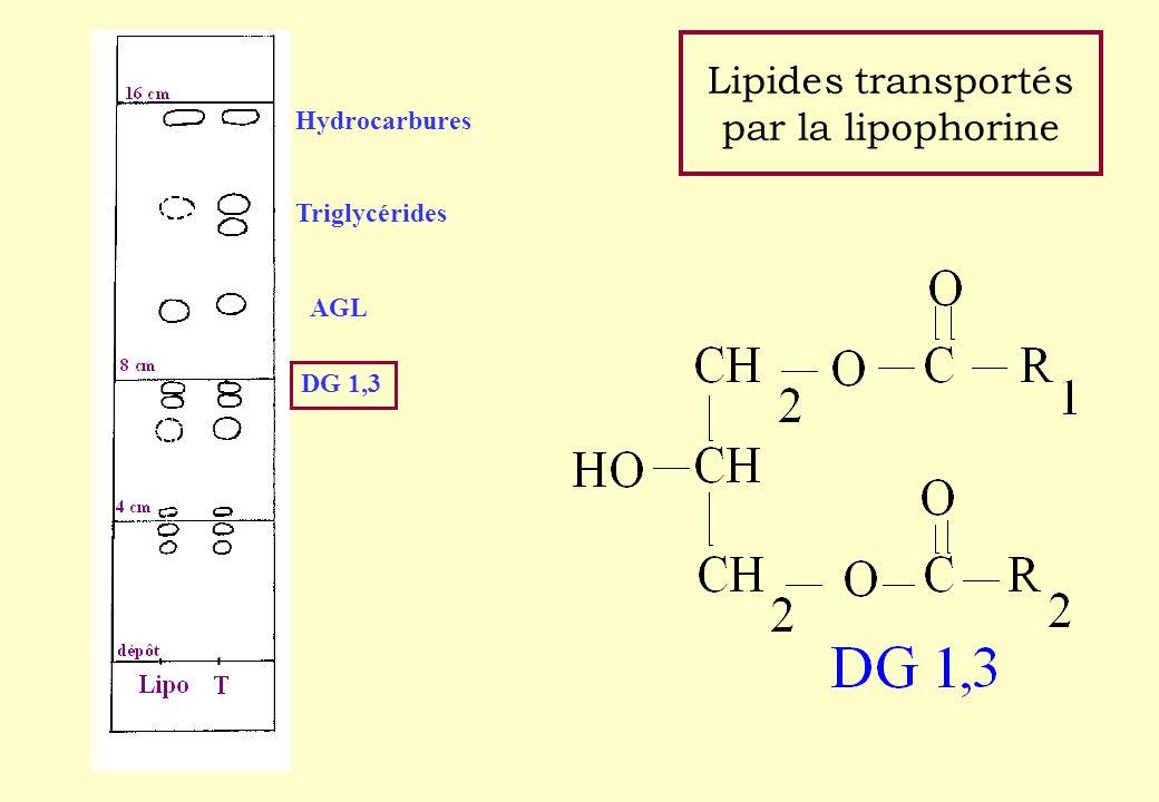 Lipides transportés par la lipophorine Hydrocarbures Triglycérides AGL DG 1,3