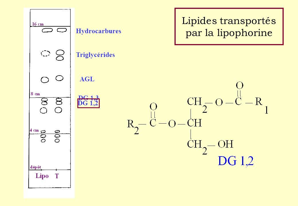 Lipides transportés par la lipophorine Hydrocarbures Triglycérides AGL DG 1,3 DG 1,2