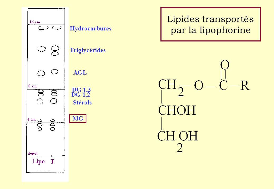Lipides transportés par la lipophorine Hydrocarbures Triglycérides AGL DG 1,3 DG 1,2 Stérols MG