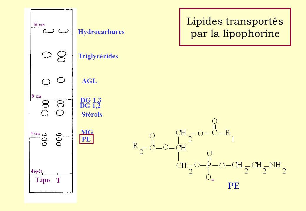 Lipides transportés par la lipophorine Hydrocarbures Triglycérides AGL DG 1,3 DG 1,2 Stérols MG PE