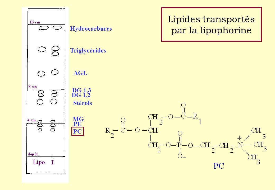 Lipides transportés par la lipophorine Hydrocarbures Triglycérides AGL DG 1,3 DG 1,2 Stérols MG PE PC