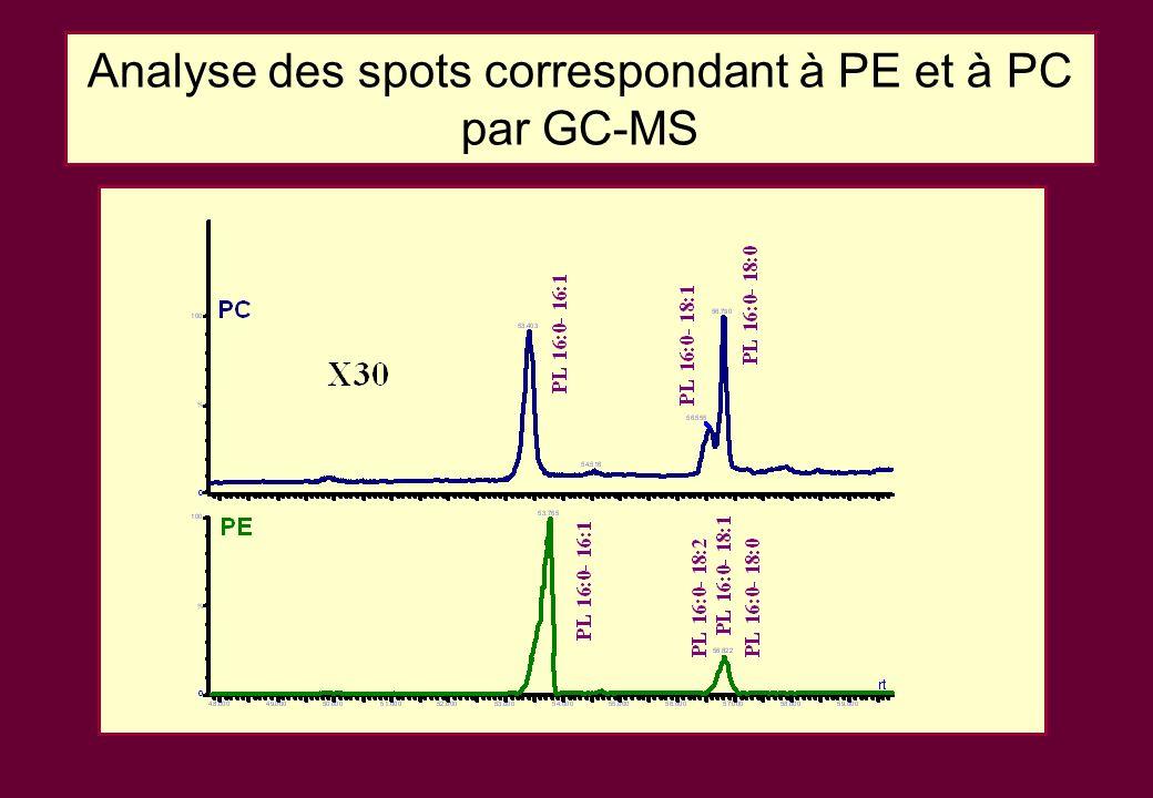 Analyse des spots correspondant à PE et à PC par GC-MS