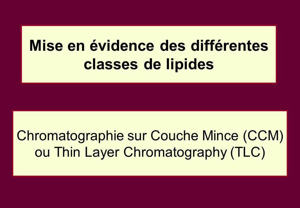 Mise en évidence des différentes classes de lipides Chromatographie sur Couche Mince (CCM) ou Thin Layer Chromatography (TLC)