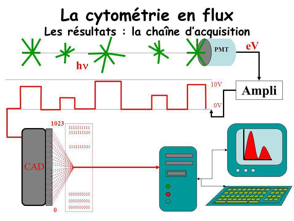 La cytométrie en flux Les résultats : la chaîne dacquisition h Ampli eV PMT 0V 10V CAD 0 1023 0000000000 0000000001 0000000010 1111111011 1111111111 1