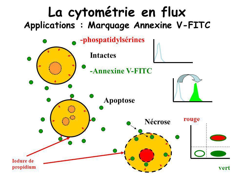 La cytométrie en flux Applications : Marquage Annexine V-FITC -phospatidylsérines -Annexine V-FITC Apoptose Intactes Nécrose Iodure de propidium vert