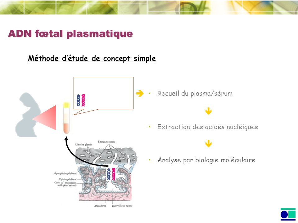 ADN fœtal plasmatique Méthode détude de concept simple Recueil du plasma/sérum Extraction des acides nucléiques Analyse par biologie moléculaire
