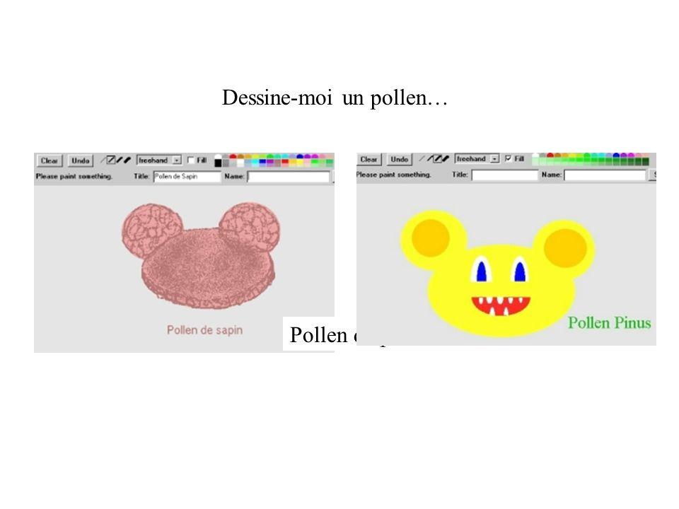 Dessine-moi un pollen… Pollen de pin