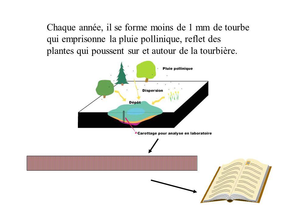 CalluneBouleau Pin