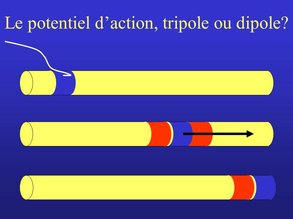 Le potentiel daction, tripole ou dipole?