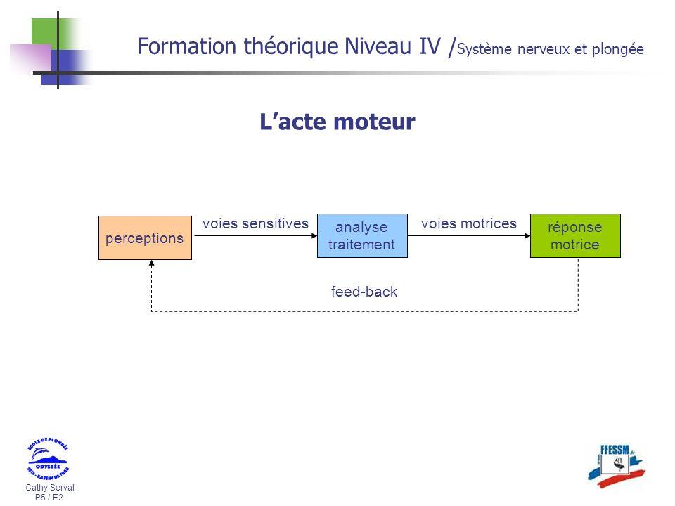Cathy Serval P5 / E2 Formation théorique Niveau IV / Système nerveux et plongée Lacte moteur réponse motrice voies motrices perceptions feed-back anal