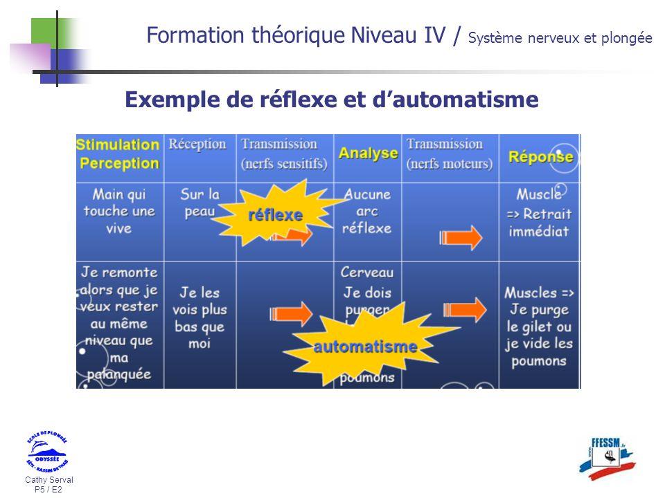 Cathy Serval P5 / E2 Formation théorique Niveau IV / Système nerveux et plongée Exemple de réflexe et dautomatisme