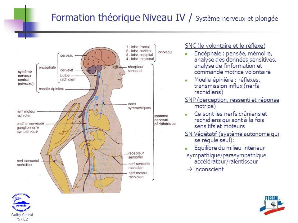 Cathy Serval P5 / E2 Formation théorique Niveau IV / Système nerveux et plongée SNC (le volontaire et le réflexe) Encéphale : pensée, mémoire, analyse