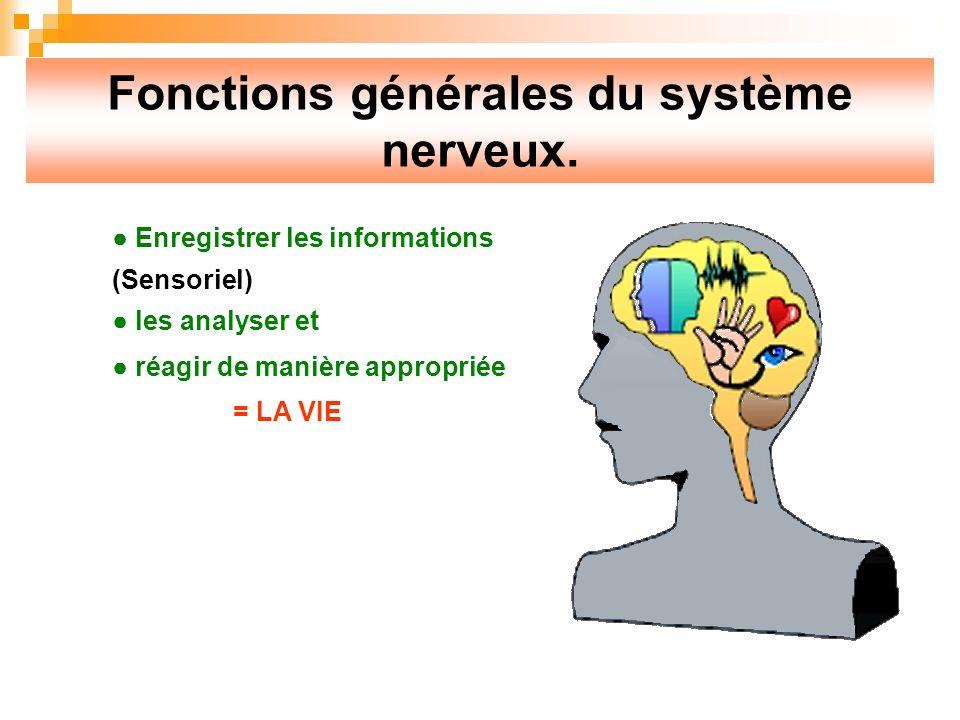 Fonctions générales du système nerveux.