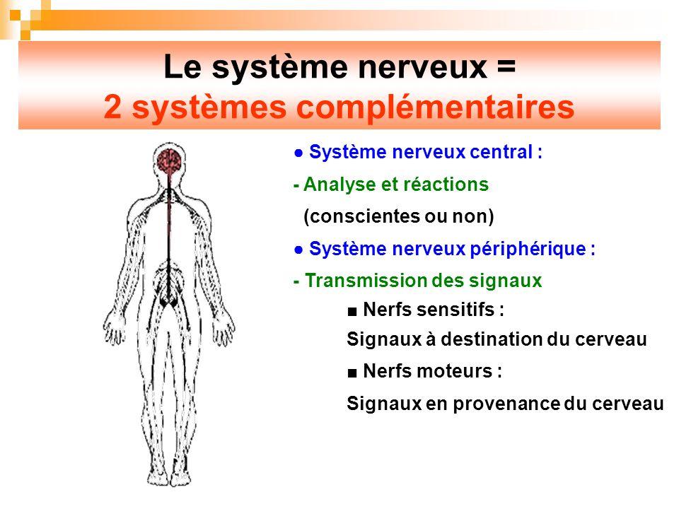 Le système nerveux = 2 systèmes complémentaires Système nerveux central : - Analyse et réactions (conscientes ou non) Système nerveux périphérique : - Transmission des signaux Nerfs sensitifs : Signaux à destination du cerveau Nerfs moteurs : Signaux en provenance du cerveau