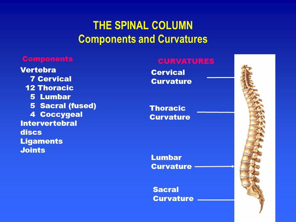 Cervical Spine -- Left Anterior Oblique View