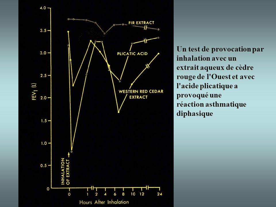 Un test de provocation par inhalation avec un extrait aqueux de cèdre rouge de l Ouest et avec l acide plicatique a provoqué une réaction asthmatique diphasique