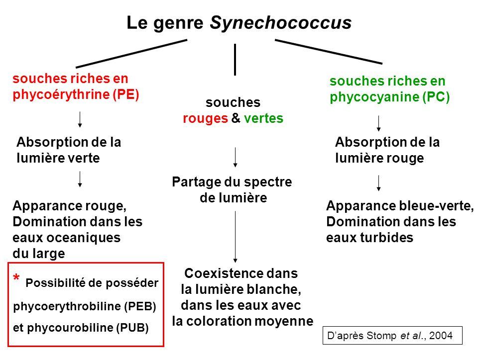 Le genre Synechococcus souches riches en phycoérythrine (PE) souches rouges & vertes souches riches en phycocyanine (PC) Absorption de la lumière vert