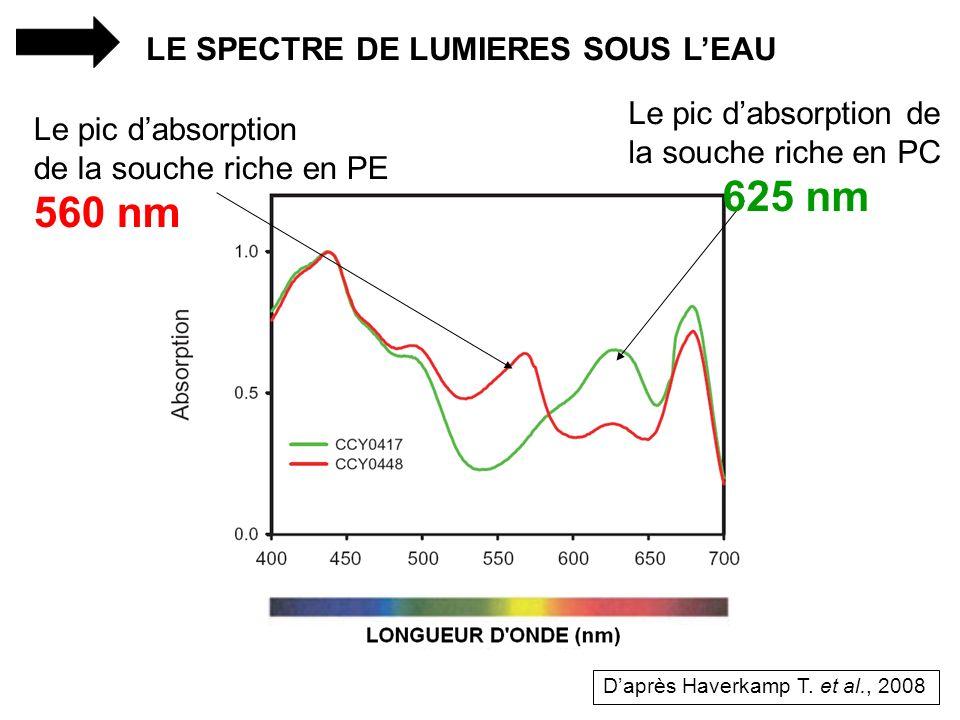 LE SPECTRE DE LUMIERES SOUS LEAU Le pic dabsorption de la souche riche en PE 560 nm Le pic dabsorption de la souche riche en PC 625 nm Daprès Haverkam