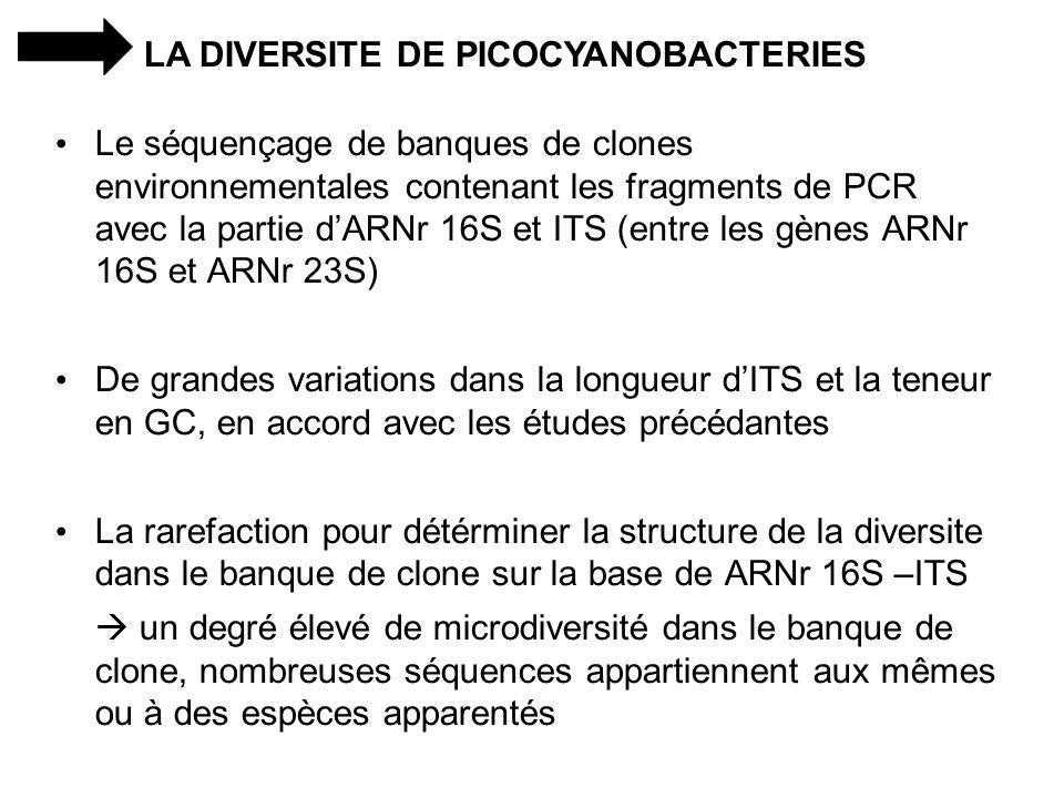 LA DIVERSITE DE PICOCYANOBACTERIES Le séquençage de banques de clones environnementales contenant les fragments de PCR avec la partie dARNr 16S et ITS