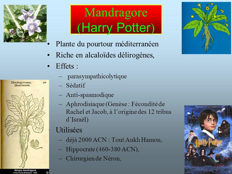22 Mandragore ( Harry Potter ) Plante du pourtour méditerranéen Riche en alcaloïdes délirogènes, Effets : – parasympathicolytique –Sédatif –Anti-spasmodique –Aphrodisiaque (Genèse : Fécondité de Rachel et Jacob, à lorigine des 12 tribus dIsraël) Utilisées –déjà 2000 ACN : Tout Ankh Hamon, –Hippocrate (460-380 ACN), –Chirurgien de Néron,